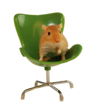 gerbil+egg+chair