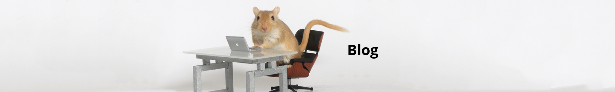 Gerbil Meets Mouse Publishing Header