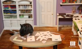 Petri Builds A Miniature Dollhouse