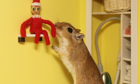Help Petri Find His Elf
